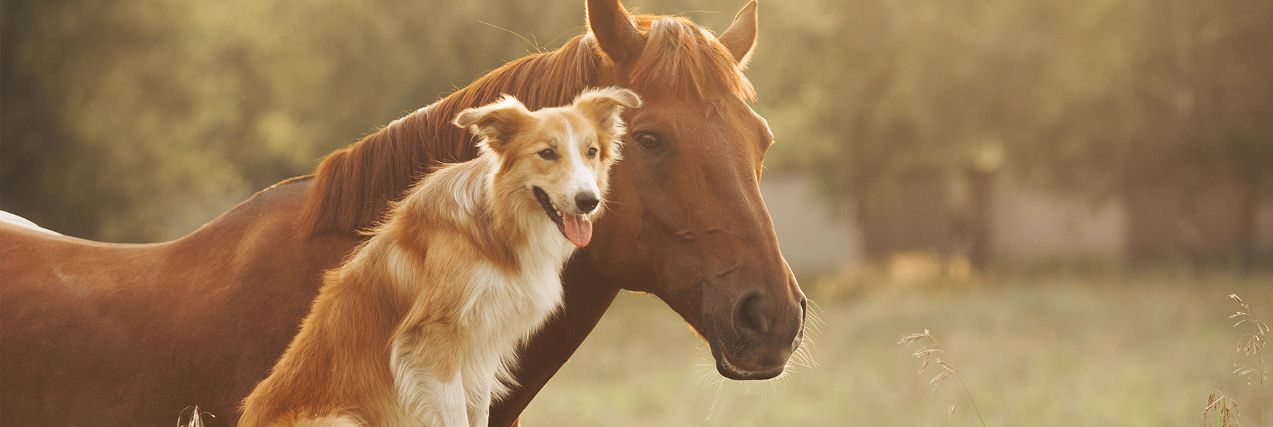 Supplementing Your Horse with Glucosamine and MSM…Use with Caution