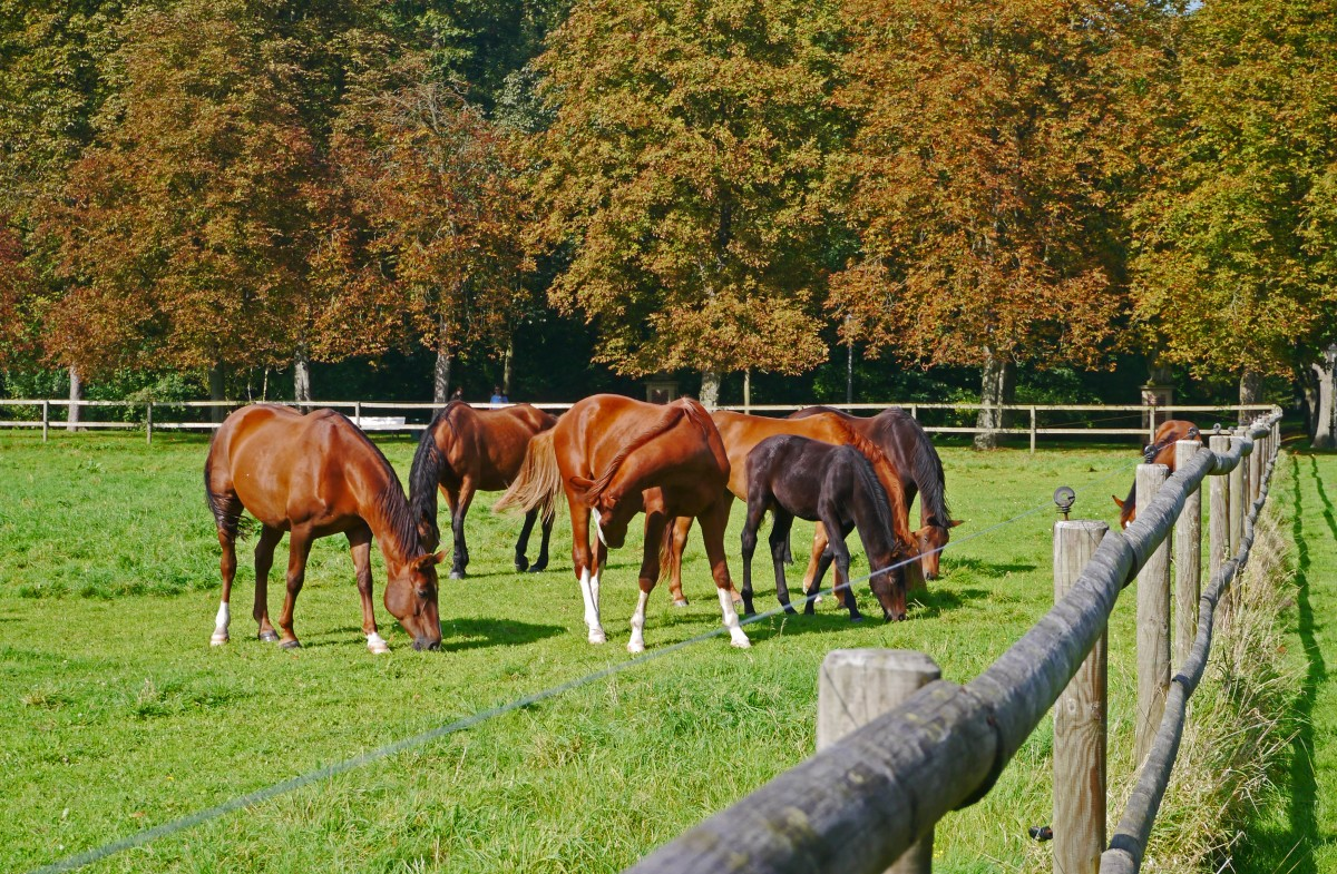 Spring Grass…Graze Your Horses With Caution - Riva's Remedies
